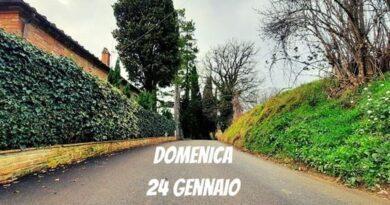 Montepulciano: domani 24 gennaio in mattinata chiusa al traffico via San Bartolomeo per consentire abbattimento pianta pericolante