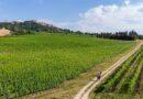 Turismo esperienziale sulle Strade del Vino di Toscana: è online il portale di prenotazione delle attività turistiche della regione