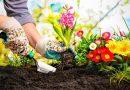 """""""Adotta uno spazio verde"""" : Città della Pieve lancia una nuova iniziativa green"""