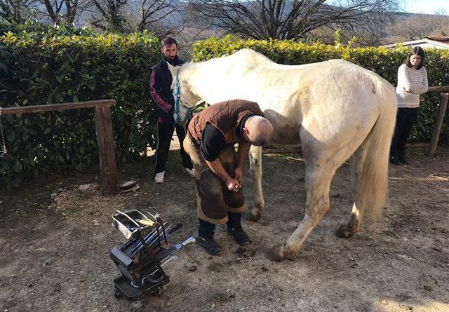 Equine incontri UK
