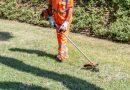 Città della Pieve: prosegue fino al 12 giugno la 'cura' del verde